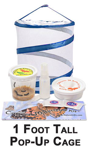 Complete Butterfly Kit