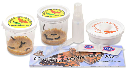 Medium Butterfly Rearing Kit - butterfly kit