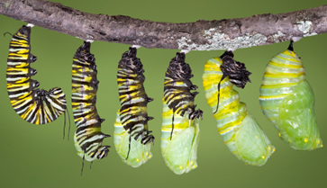 caterpillar emerging Transforming Your Life With A Life Coach