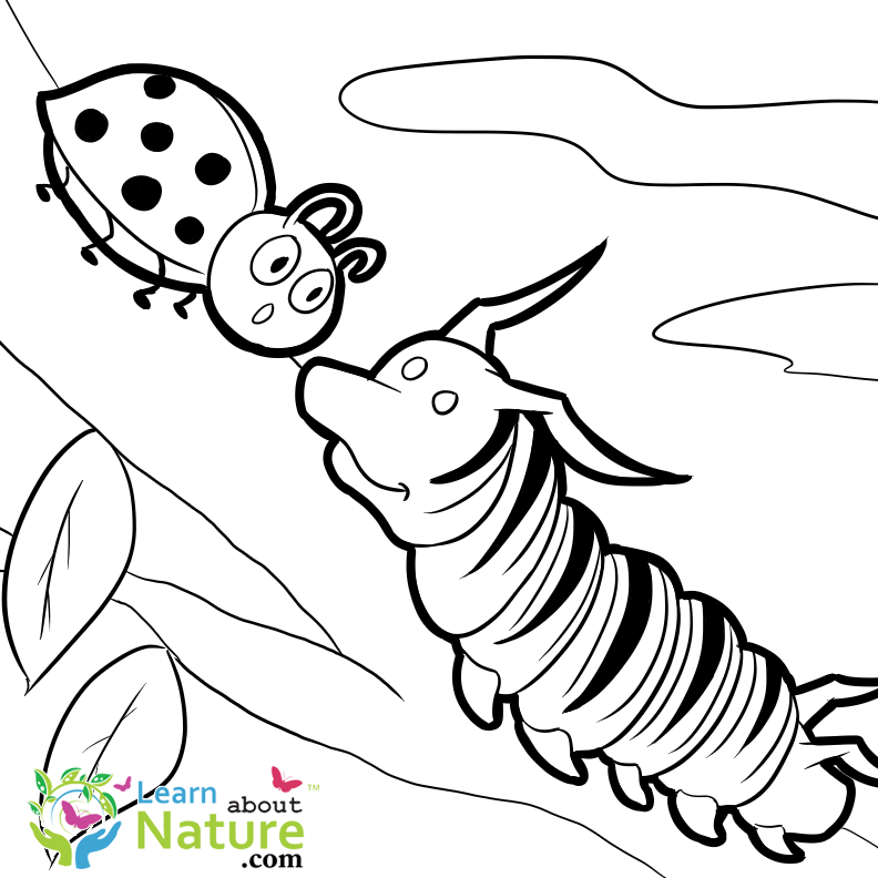 - FREE Monarch Caterpillar Coloring Page