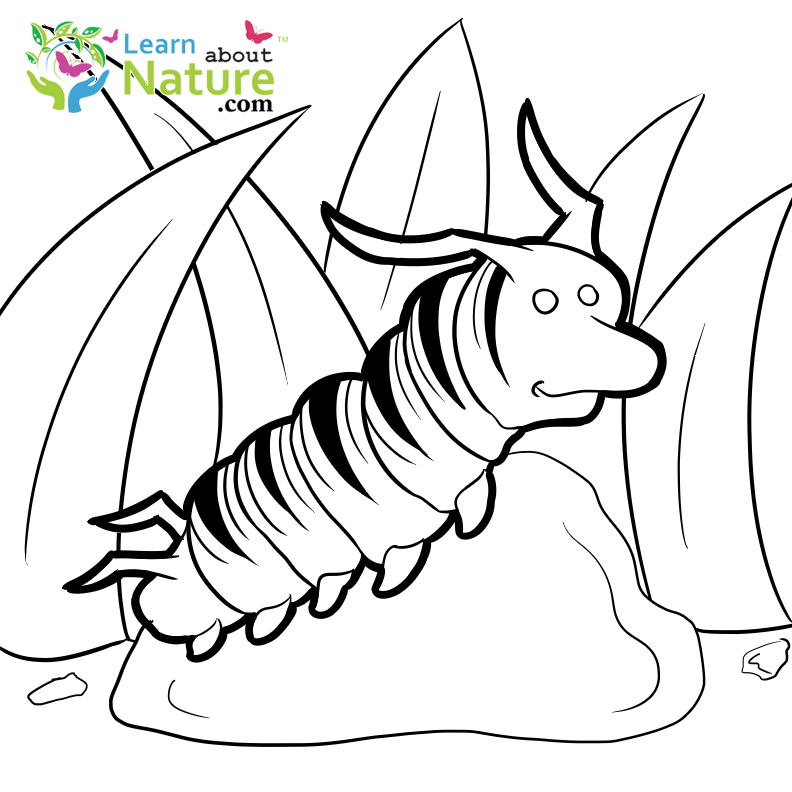 free monarch caterpillar coloring page