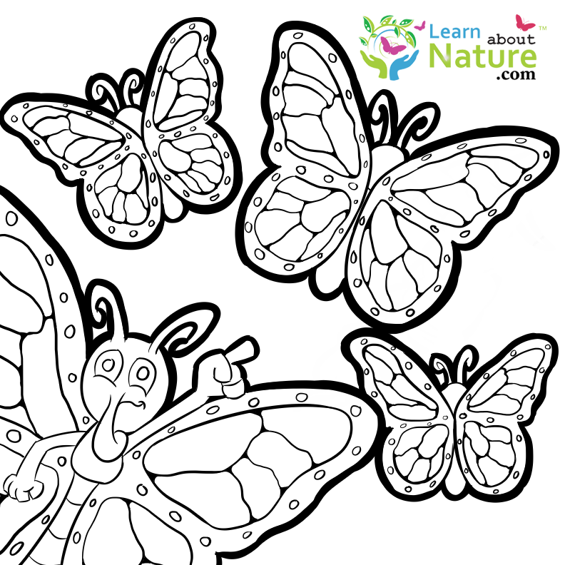 FREE Monarch pictures! Never be bored with so many coloring sheets/pages to print out and color in.